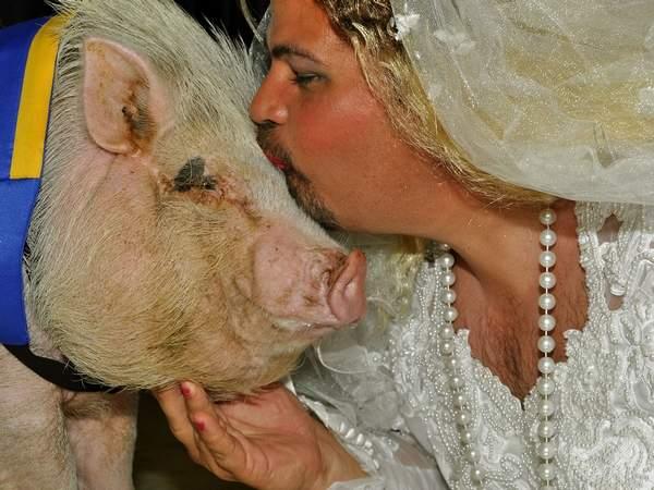 wedding-dress-man-pig.jpg